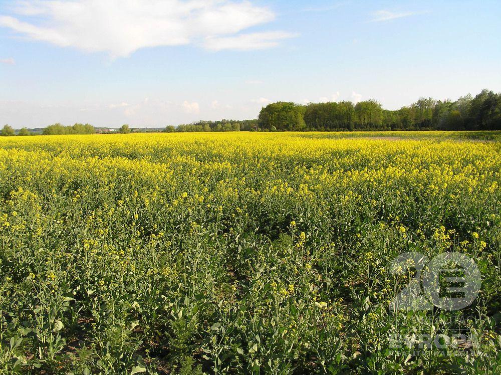 Velký Osek/prodej rovinatého pole 3460m2/s kvalitní zemědělskou půdou