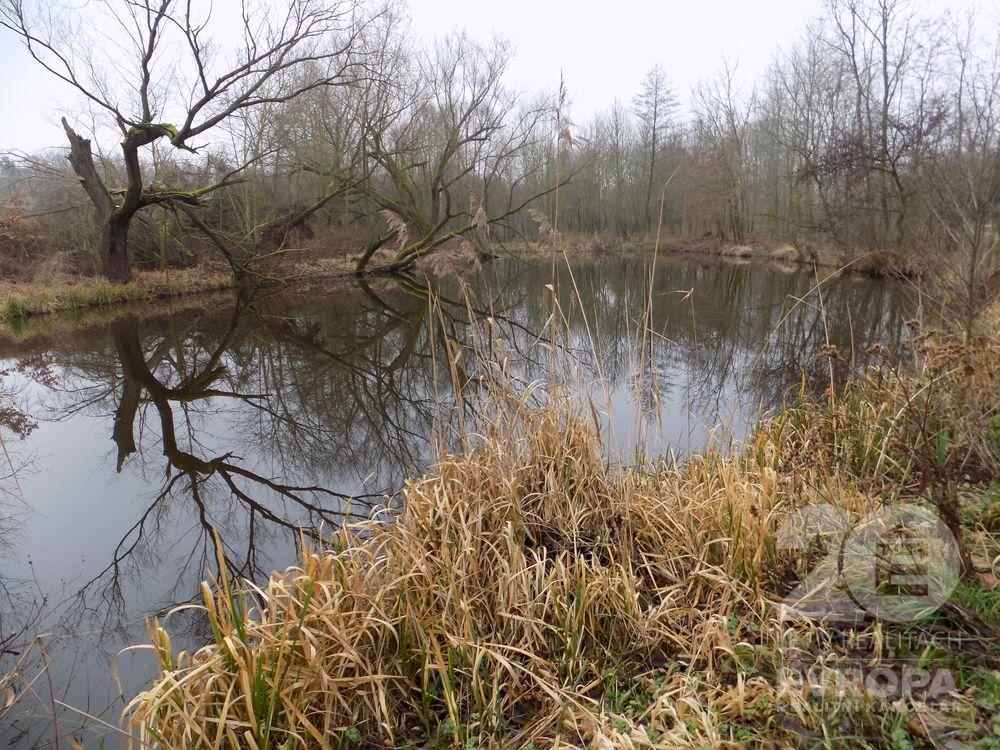 Prodej rybníku (2 274 m2) s lesním pozemkem (2 058 m2), Týnec nad Labem